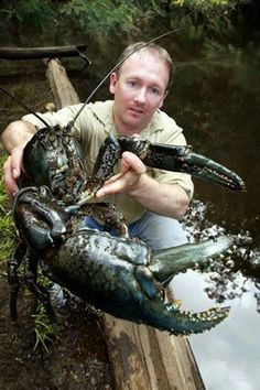 Tasmanian Giant Freshwater Crayfish is the world's largest freshwater invertebrate. Due to habitat loss & over fishing, it has unfortunately become an endangered species. Unusual Animals, Rare Animals, Animals And Pets, Strange Animals, Beautiful Creatures, Animals Beautiful, Freshwater Lobster, Marine Life, Sea Creatures