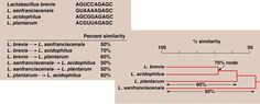 CLADOGRAM= prokaryote cladograms are based on rRNA sequence information