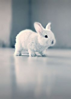 My first love of bunnies.  My next door neighbor (an adult) had a white bunny on his back porch when I was 6.  I would peek out the window and see him mistreat the poor bunny!  Oh, how my heart hurt for that little creature!  I SO wanted to rescue it . . ..