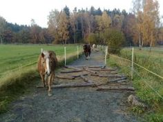Place obstacles on the track to keep the horses alert.