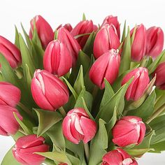 30 Pink Tulips with Vase http://www.serenataflowers.com/en/uk/flowers/next-day-delivery/product/107452/30-pink-tulips-with-vase?refPageID=5045&refDivID=6|center|product-set|category-list|4x5|1+++3|3|product|107452|image|140x140|standing|4|3|standard|
