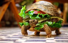 Chinese man attempts to smuggle his turtle on a plane by hiding it in a cheeseburger