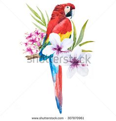 watercolor drawing isolated, trendy print with a parrot cockatoo palm leaves and flowers of hibiscus, tropical illustration