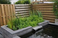 """Get wonderful suggestions on """"rainwater harvesting architecture"""". They are actually readily available for you on our web site. Ponds Backyard, Backyard Landscaping, Back Gardens, Small Gardens, Modern Pond, Garden Pond Design, Goldfish Pond, Vertical Garden Wall, Pond Water Features"""