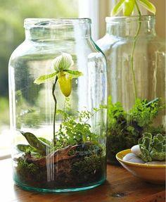 decoration bocal en verre, terrarium, plantes vertes, terre et cailloux
