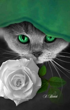 =^:^= Splash of Colour =^:^= Splash Photography, Black And White Photography, Color Splash Photo, Flowery Wallpaper, Color Of Life, Green Eyes, Cat Art, Bunt, Cute Cats