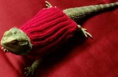 Bearded Dragon Sweaters, Hamster Clothes, Hamster Sweater, Guinea Pig Clothes, Bearded Dragon, Hamster, Rabbit, Pet Clothing by PetsParade on Etsy