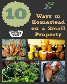 Homesteading is growing in popularity as more and more people look to be self sufficient and eco-conscious. If you have a small property, you can partake by using these 10 simple ideas to get started. Here are some great tips from multi-purpose animal raising to food prep and storage techniques. See more helpful hints at …