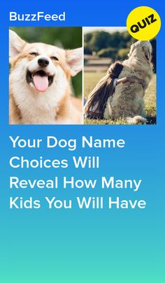 Your Dog Name Choices Will Reveal How Many Kids You Will Have 5 kids. Buzzfeed Personality Quiz, Personality Tests, Dog Quizzes, Chihuahua Facts, Best Buzzfeed Quizzes, Fun Quizzes To Take, Pound Puppies, What Dogs