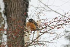 A Winter Berry Garden to Feed Birds, Gardenista