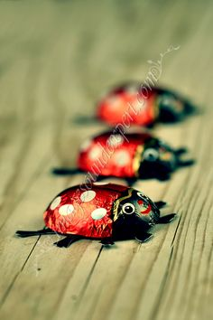 These chocolate ladybugs were thought to bring good luck.