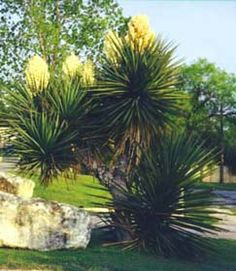 Tejas Valley RV Park and Campground Camping In Texas, Rv Parks And Campgrounds, Central Texas, Travel Bugs, North West, San Antonio, Lakes, Spanish, Bloom