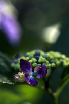 Blue Bloom Ageoshi, Saltama, Japan