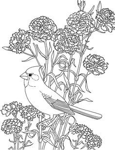 Carnation Flower And Cardinal Bird Coloring Page