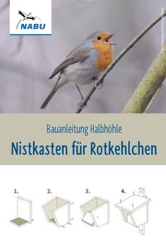 Robins are often guests in our gardens. But they also often lack the nesting opportunities. If you want to help, you can hang up a nesting box. Building instructions nesting box for robins NABU nabude DIY Bauanlei Robins, Most Beautiful Pictures, Cool Pictures, Garden Design Plans, Very Tired, Love Garden, Bird Houses, In The Heights, Diy And Crafts