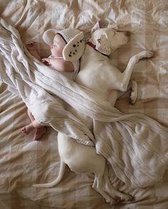 Nora, uma pointer, tem como melhor amigo o nenê Archie de 8 meses, além de mais três gatinhos e e dois cães resgatados. As fotos dessa turminha são extrem