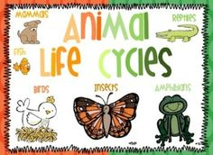 Animal life cycle unit. This unit is designed to teach children about the life cycles and classification of different animals: mammals, insects, reptiles, amphibians, birds, and fish.