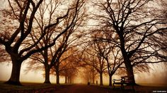 """Tory Rowlands: """"A path to nowhere in Abington Park, Northampton."""""""