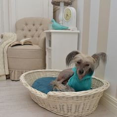 Wicker den, bed for dog or cat with turquoise pillow. Pillow has a removable cover (zip), which can be washed.
