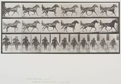Eadweard Muybridge (American, b. England, 1830-1904)  Plate 594 from Animal Locomotion, 1887  'Pronto' pacing, harnessed to silky.   Collotype on paper, 13-11/16 x 19-7/16 in.   Gift of Mrs. Jill Tane.  1995.16.19