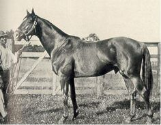 Man O'War,one of the greatest thoroughbreds ever, b. 1917 - d. 1947