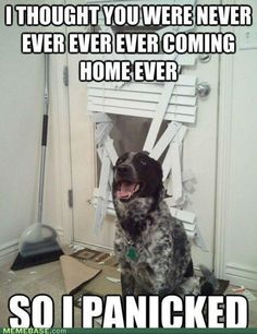 once had a dog that did this. don't have that dog anymore