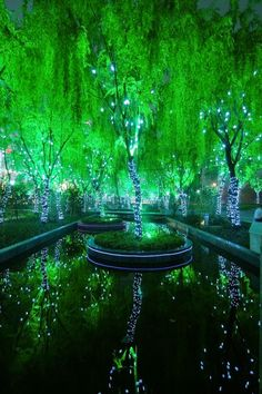 Photos Hub: Amazing Magic Forest in Shanghai, China