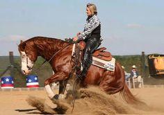 CT gunner quarter horse stallion