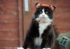 Gato chamado Fox exibe um dos modelos de chapéu presentes na obra (Foto: Liz Coleman/Running Press/Quarto/AP)