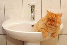 Garfi-Cat in the sink