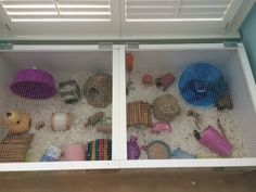 Proud of your hamsters cage - Page 840 - Supplies & Accessories Hamster Habitat, Hamster Toys, Hamster Stuff, Pet Rat Cages, Gerbil Cages, Pet Mice, Pet Rats, Guinea Pig Care, Guinea Pigs