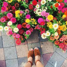Pretty pretty blooms
