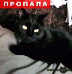 Пропал кот любимый малыш г.Москва http://poiskzoo.ru/board/read26200.html  POISKZOO.RU/26200 Так и не нашелся наш малыш ТИША! Но мы не теряем надежды и продолжаем поиски! Тиша потерялся .. около дома по адресу: г. Москва, ул. Тихомирова, д. .., корп. .., .. лет, окрас черный, на груди маленькое белое пятно (немного рваное), глаза желтые, небольшой, кастрирован. С детства ужасный трусишка, боится машин и чужих людей, не подойдет, но может откликнется на имя, совсем не знает улицы, может…