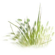 NLD Grass 2.png ❤ liked on Polyvore featuring grass, flowers, greenery, fillers, plants and backgrounds