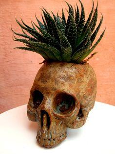 Crânio - cerâmica e suculenta