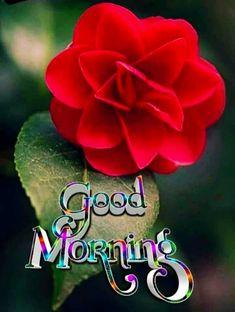 Good Morning Images For Whatsapp Good Morning Coffee Images, Good Morning Beautiful Gif, Good Morning Friends Images, Good Morning Happy Sunday, Good Morning Roses, Good Night Friends, Good Morning Photos, Good Morning Gif, Good Morning Messages
