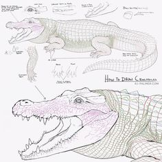 I was asked for tips on drawing crocodiles. Let me know if you have any questions. I hope this is helpful, crocs can be daunting to draw. I know it's small here, hit @ arvalis on twitter or DeviantArt to see it larger. #sketch #drawing #crocodile #tutorial #howto #alligator #creaturedesign #conceptart #anatomy #scales