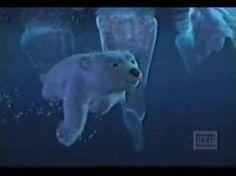 Coca Cola Commercial with this cute Polar Bear Polar Bear Cartoon, Cute Polar Bear, Polar Bears, Pub Coca, Coca Cola Commercial, Coca Cola Light, Polaroid, Cocoa Cola, Necklaces