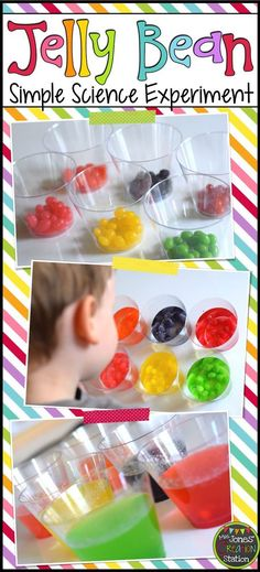 Jelly Bean Simple Science Experiment + Free Experiment page printable Easy Science Experiments, Jelly Beans, Ice Cube Trays, Cereal, Simple Science Experiments, Jelly, Corn Flakes, Breakfast Cereal, Gummi Candies