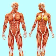 Slik forandres kroppen – dette burde jo faktisk alle vite om.