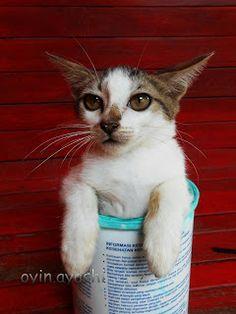 Alasan mengapa kucing pantas disayang | Oyin Ayashi