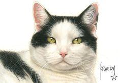 Afbeeldingsresultaat voor francien katten