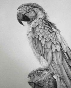 ~Monica Lee tarafından karakalem çizimler. http://www.mozzarte.com/sanat/monica-lee-tarafindan-karakalem-cizimler/