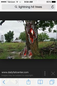 Lightning hit tree & Fire inside a tree after getting hit by lightning | Things for my ...