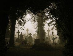 Foggy Graves Through Trees