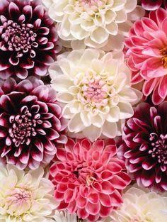 Colores colores flower