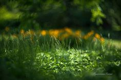 Green grass photography Meadow photo Garden by MysteriousForests