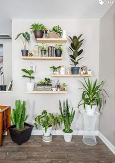 Pin by katrina eike on indoor gardens in 2019 Home Living Room, House Plants Indoor, Diy Home Decor, Home Decor, Home Deco, Plant Decor, Plant Shelves, Plant Wall, Indoor Plant Wall