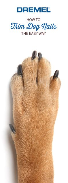 Trimming your dog's nails is fast, easy and gentle with the Dremel Pet Grooming Kit, which also saves time and money by eliminating grooming fees and visits. (dog nail trimming, trimming dog nails, dog grooming, dog grooming tips, dog stuff, dog grooming DIY, Dremel, pet grooming, pet grooming tips)