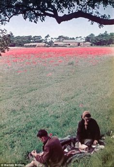The couple enjoy a picnic next to a poppy-filled meadow. The photos were shot in colour us...